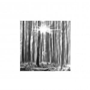 bomen084.2