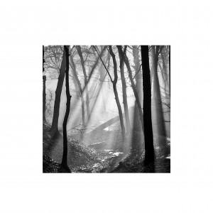 bomen11.3
