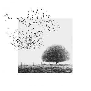 bomen27-1