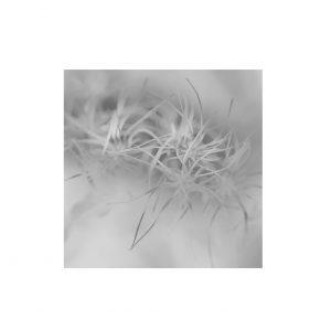 bloem01.2
